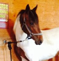 Super sale!!! Yearling 1/2 paint, 1/4 tb, 1/4 draft