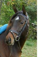 Looking for 1 or 2 rides/week?  Calm horse for on-site lease.