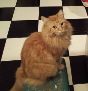 LOST - Bramble is Missing