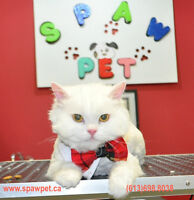 DOG AND CAT GROOMING - OTTAWA