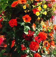 Beautiful hanging baskets and planters