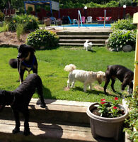 ™Chris's Dog Hotel No Cages, #1 Long Time Trusted Luxury Resort