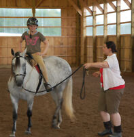 Horseback riding lessons on Paso Fino horses