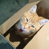 CAT SITTER & Cat Visits Thornhill, Richmond Hill, Maple, Vaughan