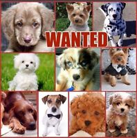 LOOKING FOR A PUPPIE !!!