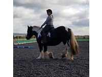 14'1 Gypsy Cob to Part Loan/Share