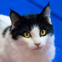 MEOW Foundation's Cutie Celine Looking for a Forever Home!
