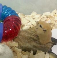 Baby gerbils are ready to go to new homes.