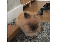 Lovely natured Rabbit.
