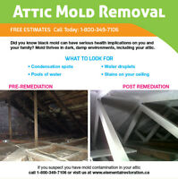 ATTIC MOLD KITCHENER
