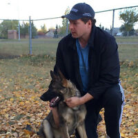 Wanted Adult Male or puppy Purebreed German Shepherd