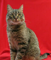 Ginger, 2yr old spayed female, vaccs up to date.
