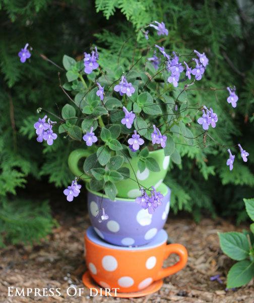 Polka dot teacup planter
