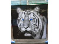 Mirror framed tiger pictures piercing eyes liquid art