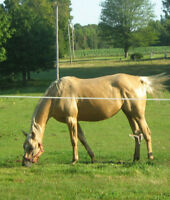 POULINIERE AQHA 8 ans 2X ON THE MONEY RED/VF EASY MONEY
