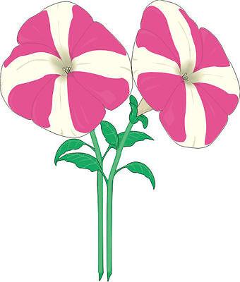0 Blume Lutscher 80 x 68 cm (Blume Lutscher)