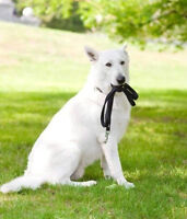 Positive Reinforcement - Professional in-home Dog Training