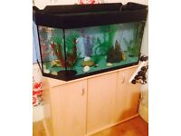 3ft fish tank full set up with fish