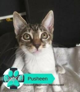 Pusheen - Friendly