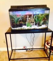 Fish tank, stand and filter