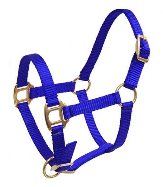 NEW HORSE TACK Showman TEAL 14/' Nylon Pro Braid Training Lead w// Brass Snaps