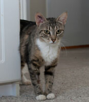 Spayed female cat looking for a good home (Fairview(