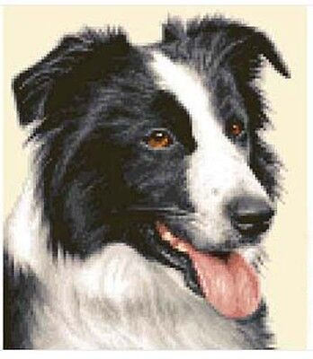 Complete Border Collie (BORDER COLLIE dog - complete counted cross stitch kit)