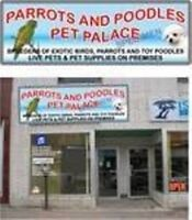 Lots Of  Pets and all Pet Supplies For Thier Needs
