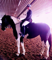 Flashy 2006 Mare by Donner Bube