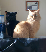 Two adult cats in need of new home