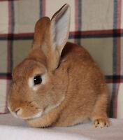 Adopt Lyla the Rabbit!