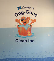 Top of the Line Dog Wash, Reasonable Prices
