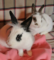 Adopt Zoe and Kloee the Rabbits!
