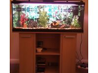 Fish tank 160L and tropical fish £130 ono