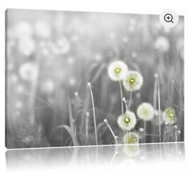Grey dandelion canvass