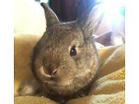 Baby English x baby rabbits