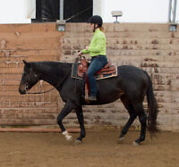 Part Board a Horse from $75 per month