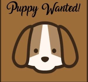 Wanted: **WANTED** Chi-Poo, Pom-Poo, Toy Poodle x, Female Puppy