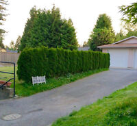 Furnished Ground Level Basement **AVAILABLE NOW**