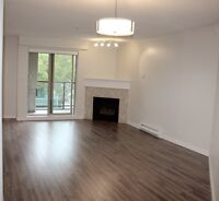 Spacious modern condo in inner harbour for rent