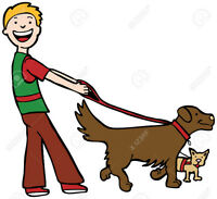 DOG WALKER NEEDED