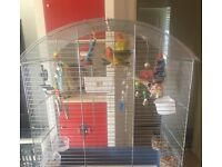 X4 love birds with cage and accessories £120