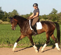 Dressage Groom Position available