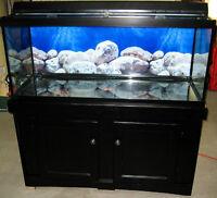 Aquarium 75 Gallons 48po (4pieds) X 19po X 22po
