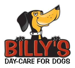 Billy's Day-Care for Dogs Pty Ltd Belmont Belmont Area Preview