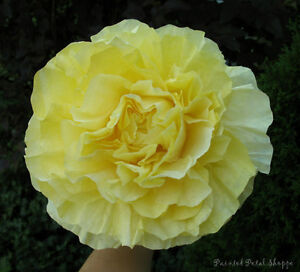 Custom Dyed Coffee Filter Peony Flower/ Wedding Decor Belleville Belleville Area image 2