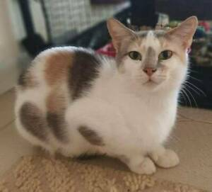 4829 : Sandy - CAT for ADOPTION - Vet Work Included