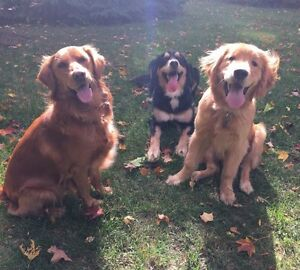 Professional and Reliable Pack Walks for Dogs Kitchener / Waterloo Kitchener Area image 2