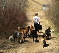 Off leash Adventure walks for dogs....Not an ordinary dog walk!!
