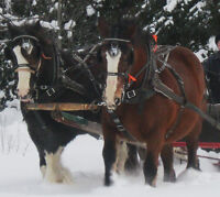 Team Draft Horse Harness